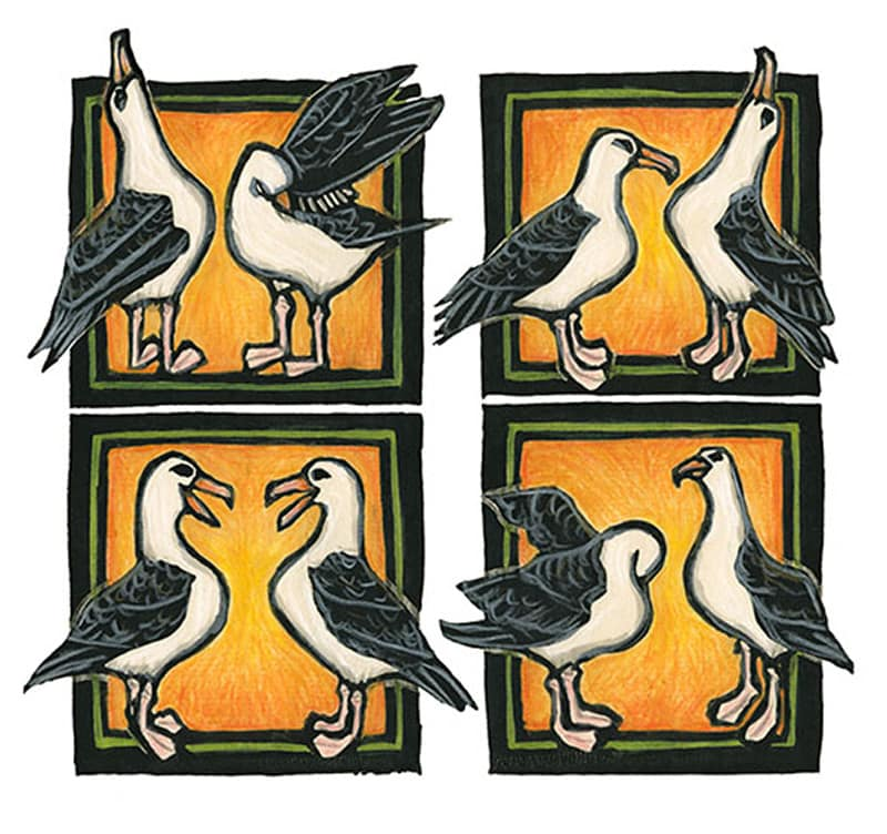 This artwork is a hand-colored block print. In four separate squares, different parts of the Laysan Albatross mating dance are shown.